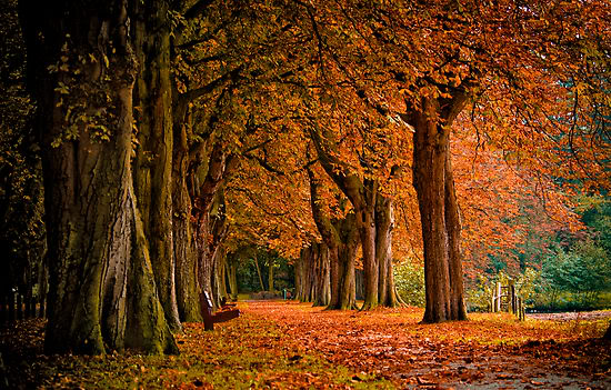 autumn-colors-in-the-forest